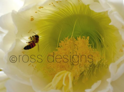 Night Blooming Cereus Bee Interior