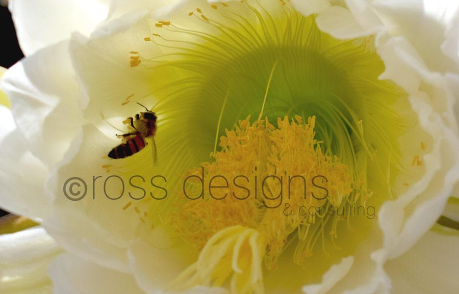 Night Blooming Cereus Bee Interior
